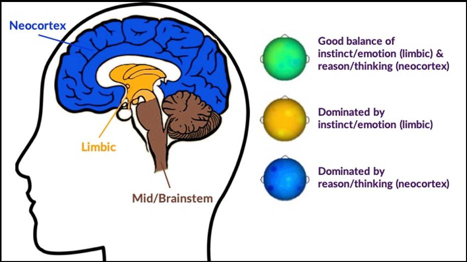 BrainTrainUK AQBM Corticolimbic Integration Model